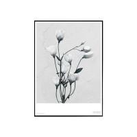 에포크 -리시안셔스(eustoma Grandiflorum) Framed