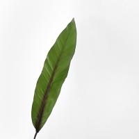 하와이안 leaf