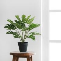 테이블 몬스테라 조화 pot(40cm)