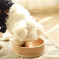 twotone color bowl