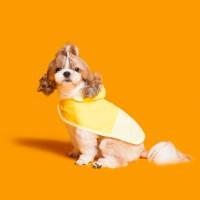 배색케이프 바람막이-옐로우