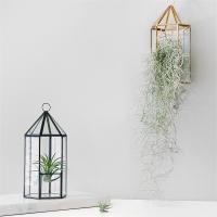 테라리움(Terrarium) - 육각기둥 집모양