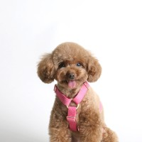 SOFT HARNESS_CHERRY PINK