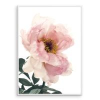 Beautiful Pink Peony 02