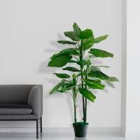 하와이안 야자수 알로카시아(120cm)