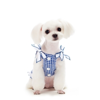 Gingham Check Ribbon Shirt_BLUE