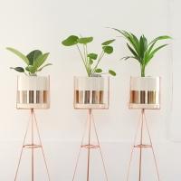 하프골드 공기정화식물+화분스탠드