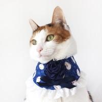 [MIYOPET] 네이비토끼 고양이 강아지 스카프 넥카라
