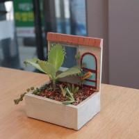 정겨운 우리집 다육 식물 화분