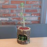 통나무 개구리 가족 다육 식물 화분