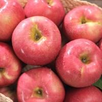[옥토] 달콤한 사과3kg x 3박스 총9kg_(712869)