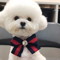 트윙클 강아지 보타이