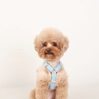 SOFT HARNESS_BABY BLUE