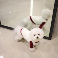 [소프트 밍크 퍼조끼]Soft mink fur vest_White