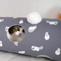 골골터널 하얀고양이