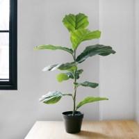 떡갈 고무나무 Black Pot 세트(90cm)