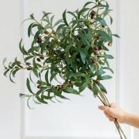 올리브나무 열매가지_(575838)
