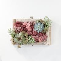 실내공기정화식물 스칸디아모스 액자