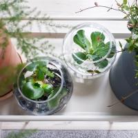 aqua ball 수생식물 투명유리볼