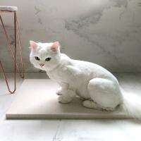 강아지&고양이 대리석쿨매트