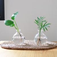 공기정화식물 수경재배 vase SET