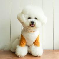 미피 배색 티셔츠 / 머스타드