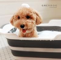 [그레이독] 접이식 강아지욕조 폴딩텁(+온도계 스티커 증정!)