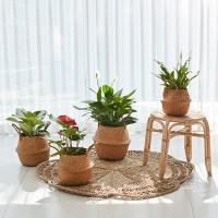 라탄바구니 공기정화식물 세트