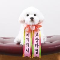 갓샵 인간화환 당일발송ver 강아지형 소형 [졸업 결혼식 생일]