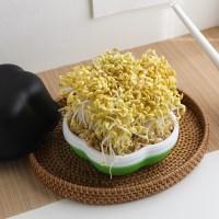 [소소한잡화점] 콩나물 & 버섯키우기 키트 외