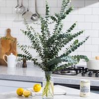 [무료배송][하루특가]생화 랜덤 믹스꽃다발/공기정화식물 유칼립투스