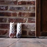 부엉이를 품은 고양이-레드or블루-인형만들기