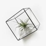 테라리움(Terrarium) - 사각20