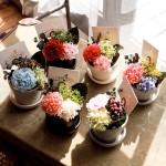 ALICE CARNATION_프리저브드플라워 카네이션(시들지 않는 꽃)