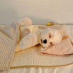 오가닉 레인보우 체크 말랑베개&이불 SET 강아지베개 강아지이불