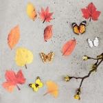 월데코 가을낙엽