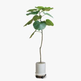 정기 세일 찬스로 꼭 하나 갖고 싶은 식물