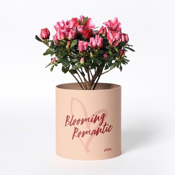 사랑의 기운을 담은 Blooming Romantic