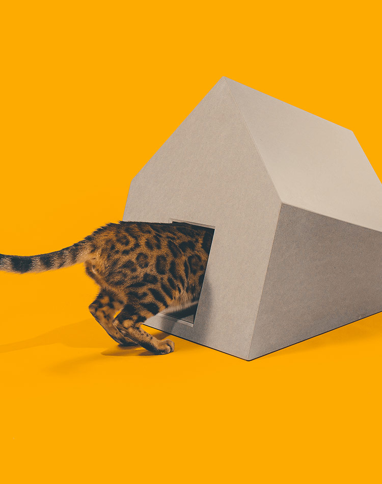 고양이의 아늑하고 은밀한 공간